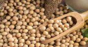 خواص سویا در اجیل ؛ معرفی دانه سویا و بررسی ارزش غذایی