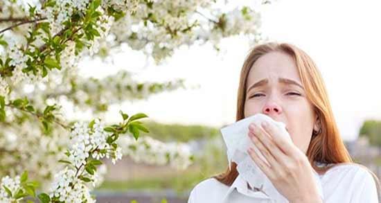 درمان آلرژی فصلی ؛ درمان حساسیت عطسه و آبریزش بینی طب سنتی