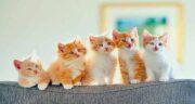 سویا برای گربه ؛ فواید و مضرات استفاده از سویا در غذای گربه