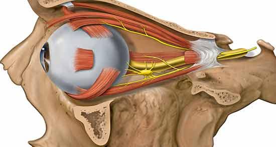 شریان افتالمیک ؛ سرخرگ چشمی یا شریان افتالمیک چیست