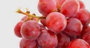 فواید انگور قرمز بی دانه ؛ خواص انگور قرمز بدون هسته برای سلامت بدن