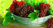 فواید انگور قرمز ؛ تندرستی و نشاط با مصرف انگور قرمز