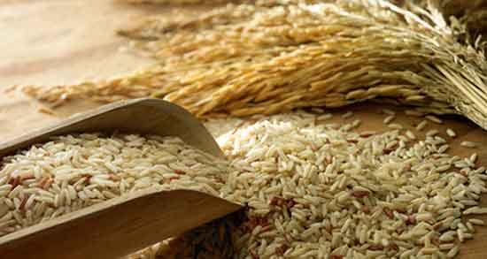 مضرات سبوس برنج برای طیور ؛ آیا استفاده از سبوس برنج برای پرندگان ضرر دارد