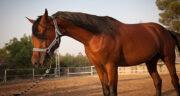 خواص گوشت اسب ؛ حلال است ؟ طبع و گوشت اسب در اسلام
