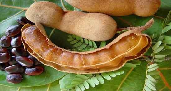 میوه تمر هندی از کجا بخرم ؛ که سالم باشد