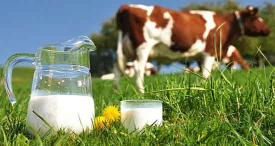 خواص شیر برای قلب ؛ خواص شیر عسل برای قلب بیماران + شیر برای تپش قلب