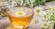 عوارض چای بابونه ؛ مصرف دمنوش چای بابونه چه عوارضی برای سلامتی دارد