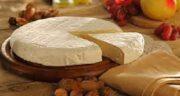 پنیر برای سگ ؛ ایا خوردن پنیر برای بدن سگ ضرر دارد + چند پنیر مفید برای سگ
