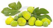 برگ انجیر در درمان دیابت ؛ بررسی تاثیر خوردن برگ انجیر برای افراد دیابتی