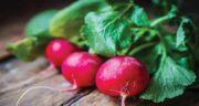 برگ تربچه برای قناری ؛ وجود ویتامین های فراوان در برگ تربچه مفید برای قناری