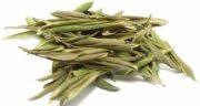 برگ زیتون چه خواصی دارد ؛ مقابله با چاقی و درمان سرماخوردگی با برگ زیتون