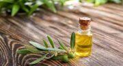 برگ زیتون در طب سنتی ؛ فواید و مضرات مصرف برگ زیتون