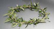برگ زیتون نماد چیست ؛ به چه علت برگ زیتون نماد صلح و آرامش است
