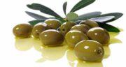 برگ زیتون و لاغری ؛ کاهش وزن و تناسب اندام با مصرف برگ زیتون