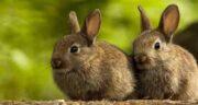 برگ مو برای خرگوش ؛ نقش استفاده از برگ مو برای تغذیه خرگوش