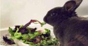برگ چغندر برای خرگوش ؛ خواص و مضرات استفاده از برگ چغندر برای غذای خرگوش