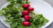 خواص برگ تربچه در طب سنتی ؛ فواید درمانی برگ تربچه از نظر طب سنتی
