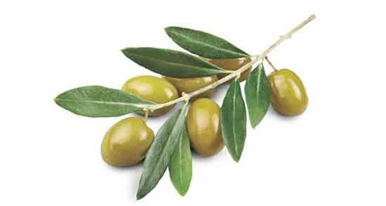 خواص برگ زیتون برای پوست ؛ تاثیر استفاده از برگ زیتون برای شادابی و سلامت پوست