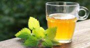خواص برگ زیتون و گزنه ؛ خاصیت درمانی و دارویی مصرف برگ زیتون با گزنه