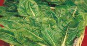 خواص برگ چغندر برای دیابت ؛ تاثیر استفاده از برگ چغندر برای افراد دیابتی
