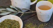 طرز تهیه دمنوش برگ زیتون ؛ آموزش درست کردن دمنوش پر خاصیت برگ زیتون