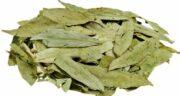 عوارض سنا ؛ استفاده از گیاه سنا چه عوارضی برای سلامتی دارد