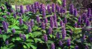 فواید گیاه ثعلب ؛ تقویت سیستم ایمنی بدن با مصرف ثعلب