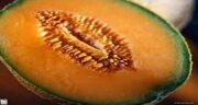 گرمک و طب سنتی ؛ فواید مصرف گرمک برای بدن از نظر طب سنتی و اسلامی