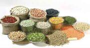 خواص عدس در طب اسلامی ؛ خواص سویق عدس در طب سنتی و اسلامی