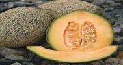 خواص گرمک برای یبوست ؛ ایا استفاده از میوه گرمک به یبوست کودکان کمک میکند