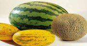 خواص گرمک در طب سنتی ؛ ایا استفاده از گرمک در طب سنتی برای کبد تاثیر دارد