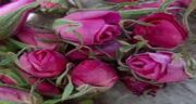 خواص غنچه گل محمدی در چای ؛ فواید مصرف غنچه گل محمدی در چای