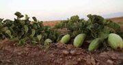 کمبزه برای سرماخوردگی ؛ استفاده از میوه کمبزه برای درمان سرماخوردگی کودکان