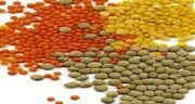 مضرات عدس ؛ عوارض عدس برای زنان باردار در طب سنتی چگونه است