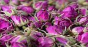 مضرات غنچه گل محمدی ؛ عوارض مصرف گل محمدی برای مردان