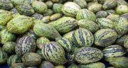میزان کالری کمبزه ؛ استفاده از میوه کمبزه چه میزان کالری برای بدن دارد