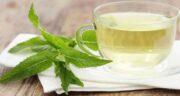 دمنوش نعناع و پونه ؛ درمان خانگی بیماری های عفونی با مصرف دمنوش نعناع و پونه