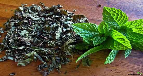خواص چای نعناع ؛ و زنجبیل و قاعدگی و نبات برای موهای زائد و لاغری و معده