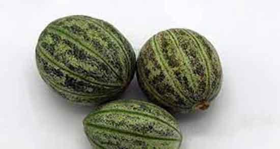 خواص کمبزه ؛ در طب سنتی و دیابت و خواص خیار خرچه چیست