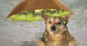 کیوی برای سگ ؛ آیا سگ ها از طعم و مزه کیوی خوششان می آید؟