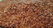 عوارض بذر کتان ؛ مضرات مصرف بذر کتان برای لاغری پهلو
