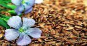 بذر کتان و لاغری شکم ؛ مصرف بذر کتان برای لاغری شکم و پهلو