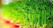 بذر کتان برای رشد مو ؛ خواص ژل بذر کتان برای تقویت مو