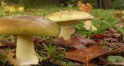 در مورد قارچ ؛ قارچ ها در چه محیطی رشد می کنند با چه هوایی