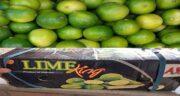 فواید پوست لیمو ترش سبز ؛ خواص پوست لیمو ترش سبز خشک