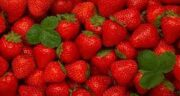 فواید توت فرنگی خشک ؛ مصرف دمنوش توت فرنگی خشک