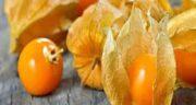 فیسالیس و بارداری ؛ مصرف میوه فیسالیس برای زنان باردار