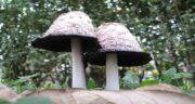 قارچ برای معده ضرر دارد؟ ؛ آیا مصرف قارچ برای معده کودک نفاخ است