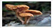 قارچ در بارداری ؛ فواید خوردن قارچ کبابی در دوران بارداری چیست