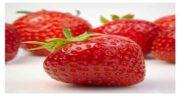 کاشت توت فرنگی ؛ دستور کاشت توت فرنگی در لوله پلیکا